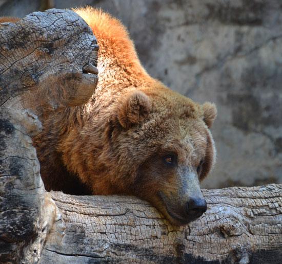 BearSmile_W