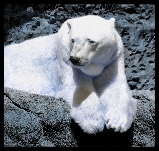 PolarBear_550
