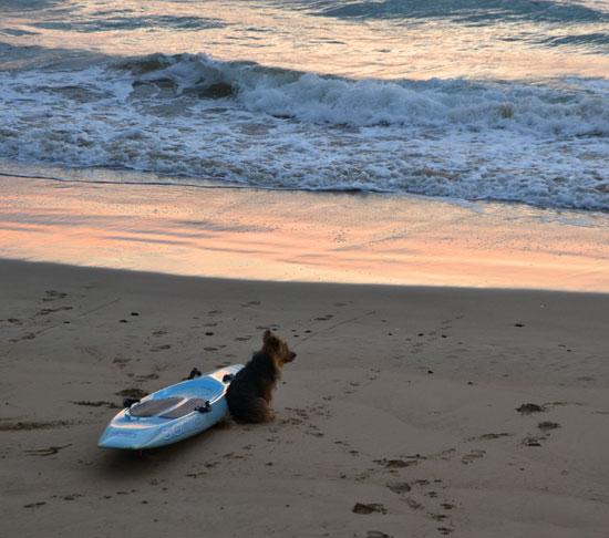 SurferDog1_W